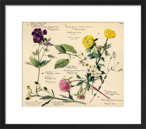 Wildflower Composite XVIII by Lillian Snelling