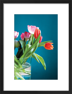 Tulips by Scott Dunwoodie