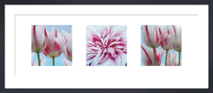 Fresh Blooms Triptych by Ella Lancaster