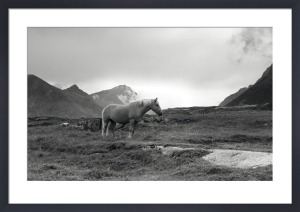Grazing Together, Lofoten Islands by Andreas Stridsberg