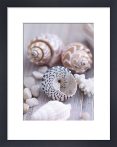 Shells and Pebbles by Howard Shooter and Lauren Floodgate