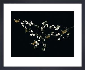 Blossom & Butterflies by Ian Winstanley