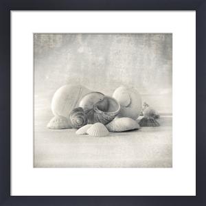 Still Life of Shells II by Ian Winstanley
