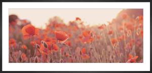 Field of Poppies by Ian Winstanley