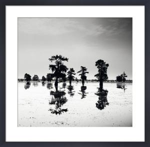 Cypress Swamp V by Josef Hoflehner
