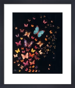Midnight Butterflies by Lily Greenwood