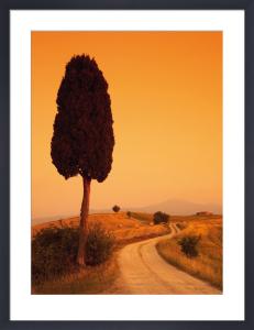 Bella Toscana by Tom Mackie