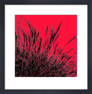 Grass (red), 2011 by Davide Polla