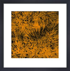 Grass (orange), 2011 by Davide Polla