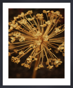 The Secret Life of Plants by Keri Bevan