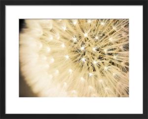 Wish by Keri Bevan