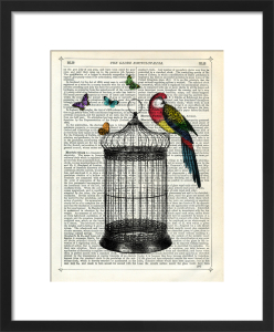 Bird Cage and Parrot by Marion McConaghie