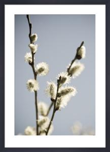Tree Willow by Deborah Schenck