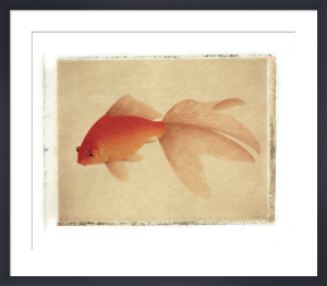 Fish 1 by Deborah Schenck