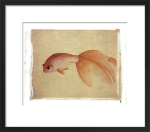 Fish 3 by Deborah Schenck