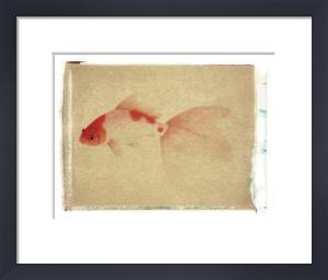 Fish 4 by Deborah Schenck