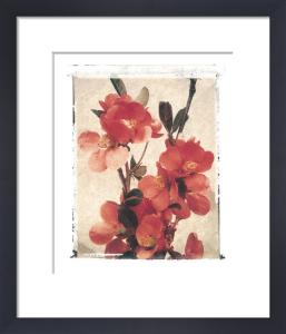 Quince by Deborah Schenck