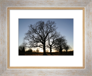 Winter Trees by Royal Horticultural Society