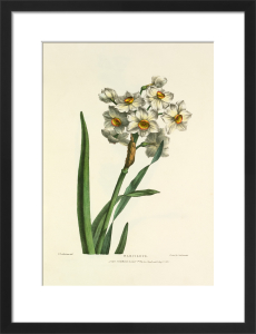 Narcissus by Charles Joseph Hullmandel