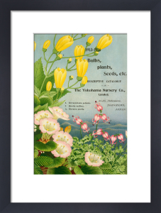 1913-14 Bulbs, Plants and Seeds by The Yokohama Nursery Co Ltd