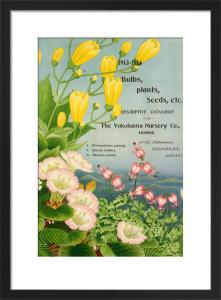 1913-14 Bulbs, Plants and Seeds by The Yokohama Nursery Co Ltd