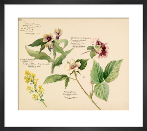 Wildflower composite XIII by Lillian Snelling