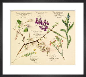 Wildflower composite VII by Lillian Snelling