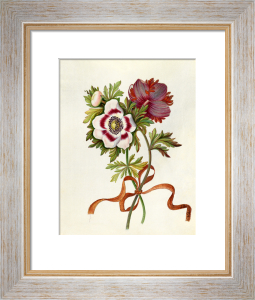 Anemones by James Bolton