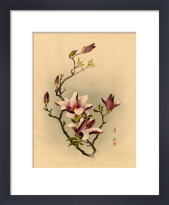 Magnolia liliiflora by Anonymous Chinese Artist