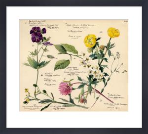 Wildflower Composite XVIII by Lillian Snelling