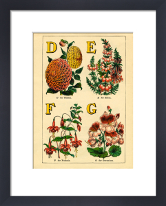 D for Dahlia, E for Erica, F for Fuschia, G for Geranium by John Dicks