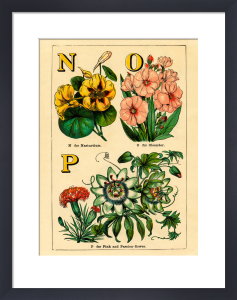 N for Nasturtium, O for Oleander, P for Pink and Passion-Flower by John Dicks