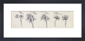 Hepatica, Chionoscilla and Eranthis by Alice Bickham