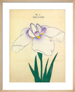 Plate 4 by The Yokohama Nursery Co Ltd