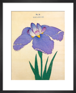 Plate 39 by The Yokohama Nursery Co Ltd