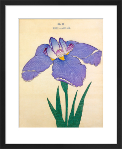 Plate 39 by The Yokohama Nursery Co Ltd