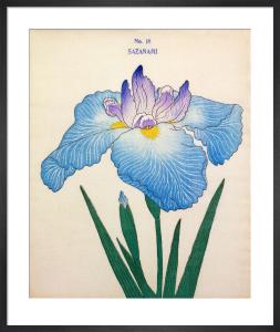 Plate 18 by The Yokohama Nursery Co Ltd