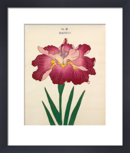 Plate 38 by The Yokohama Nursery Co Ltd