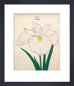Plate 45 by The Yokohama Nursery Co Ltd