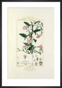 Tableau XLIX by Pierre Jean Francois Turpin