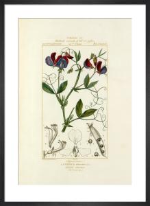 Tableau LV by Pierre Jean Francois Turpin