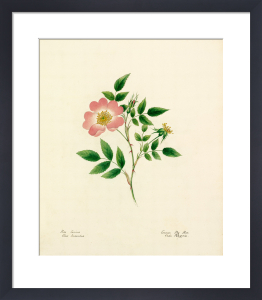 Plate 31 by Lydia Penrose