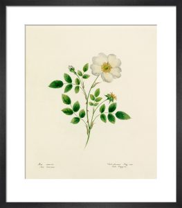 Plate 33 by Lydia Penrose