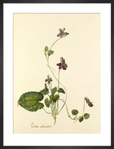 Plate 89 by Anonymous