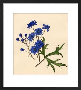 Dianthus caryophyllus : Gardenia jasminoides by Caroline Maria Applebee