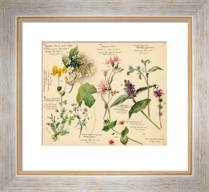 Wild Flowers Composite (Tunbridge Wells) by Lillian Snelling