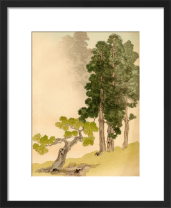 Japanese Conifers and Trees by L. Boehmer & Co