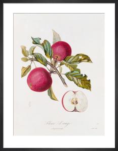 Fleur d'ange by Pierre Jean Francois Turpin