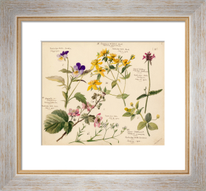 Wildflower Composite V by Lillian Snelling