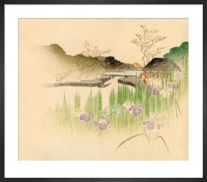 Iris by L. Boehmer & Co